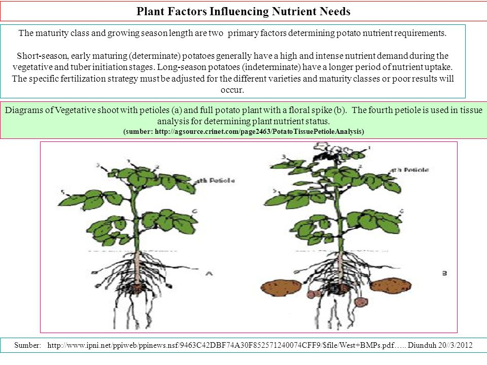 Plant Factors Influencing Nutrient Needs