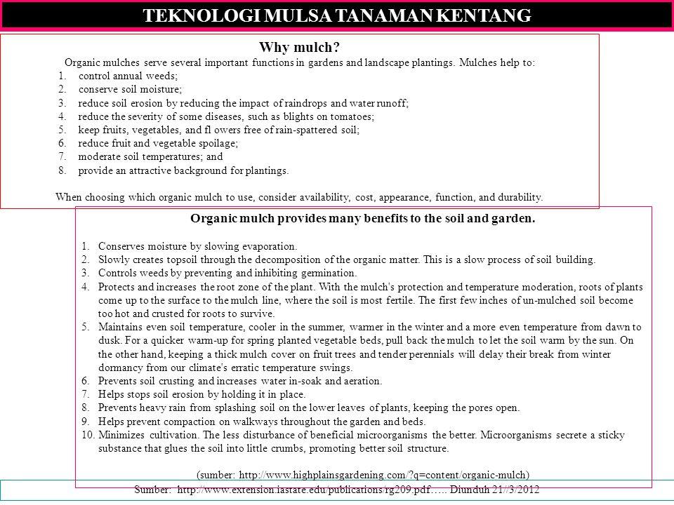 TEKNOLOGI MULSA TANAMAN KENTANG