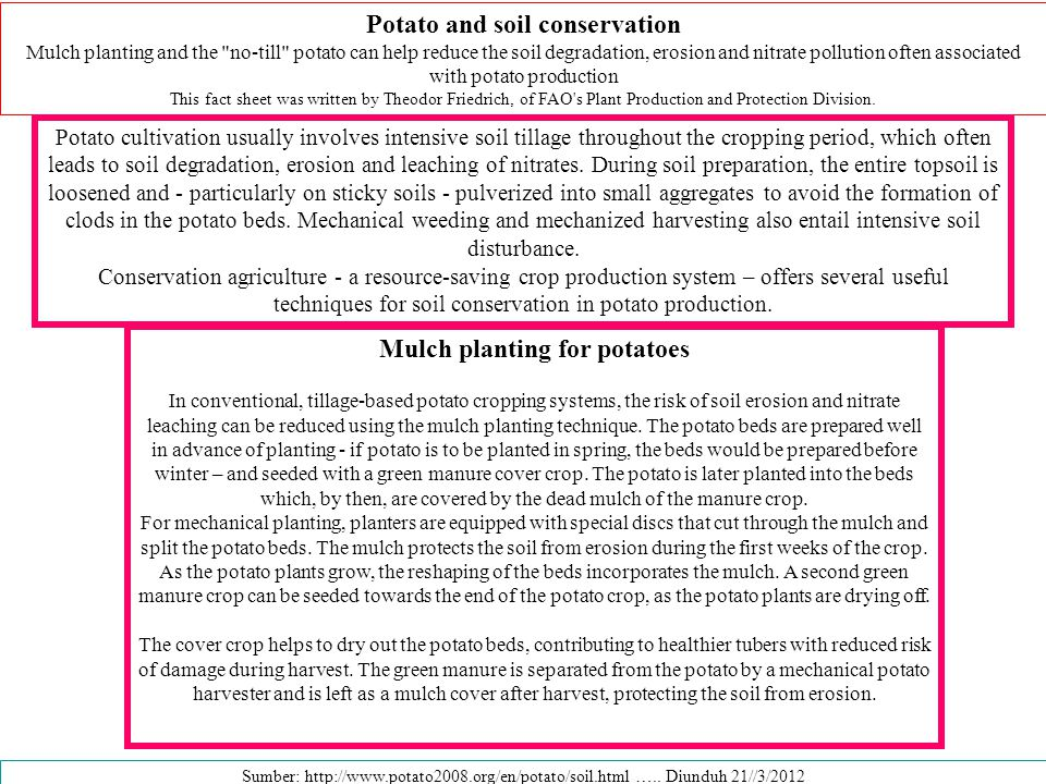 Potato and soil conservation Mulch planting for potatoes