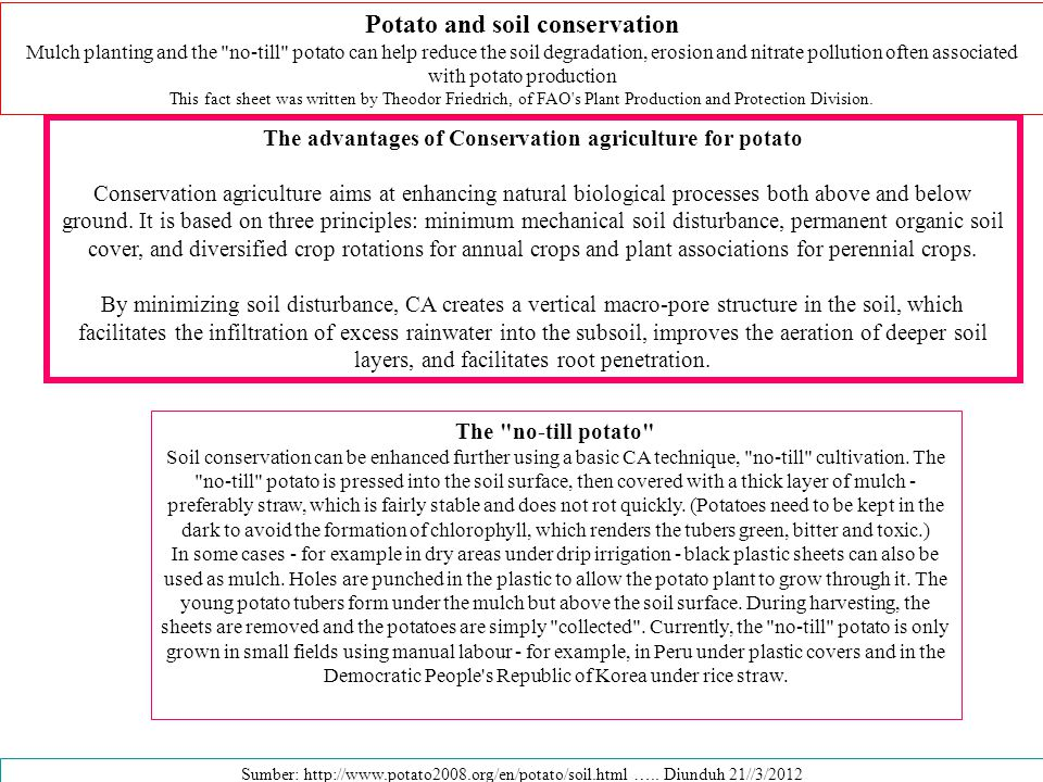 Potato and soil conservation