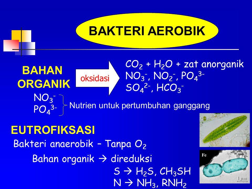 BAKTERI AEROBIK BAHAN ORGANIK EUTROFIKSASI CO2 + H2O + zat anorganik