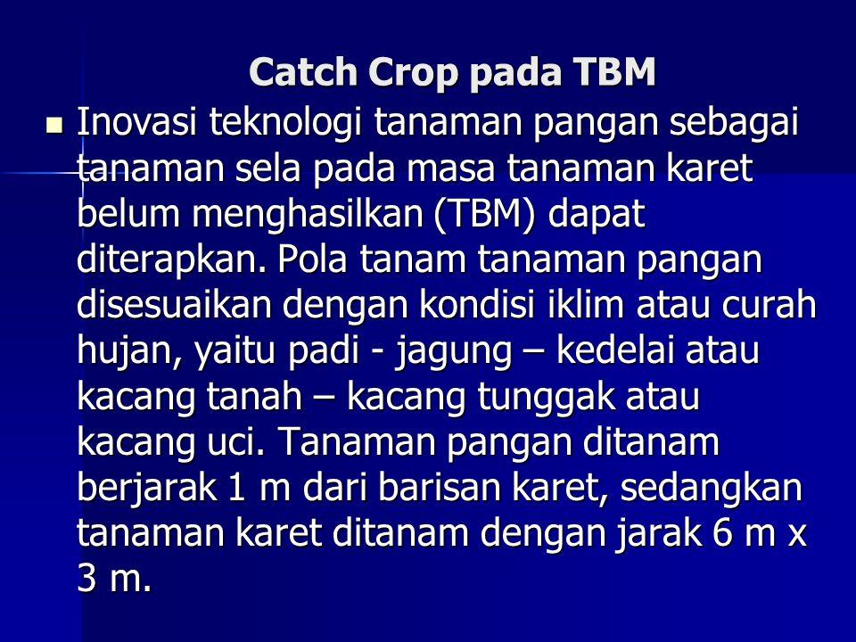 Catch Crop pada TBM