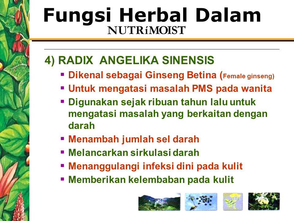 Fungsi Herbal Dalam 4) RADIX ANGELIKA SINENSIS