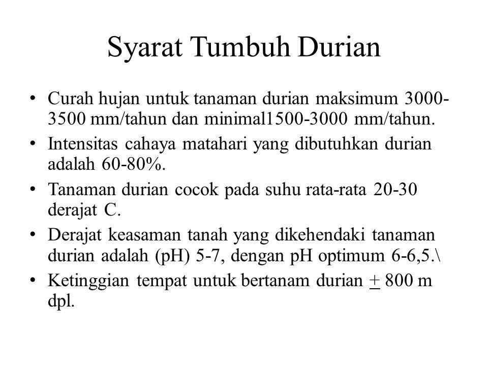 Syarat Tumbuh Durian Curah hujan untuk tanaman durian maksimum 3000-3500 mm/tahun dan minimal1500-3000 mm/tahun.