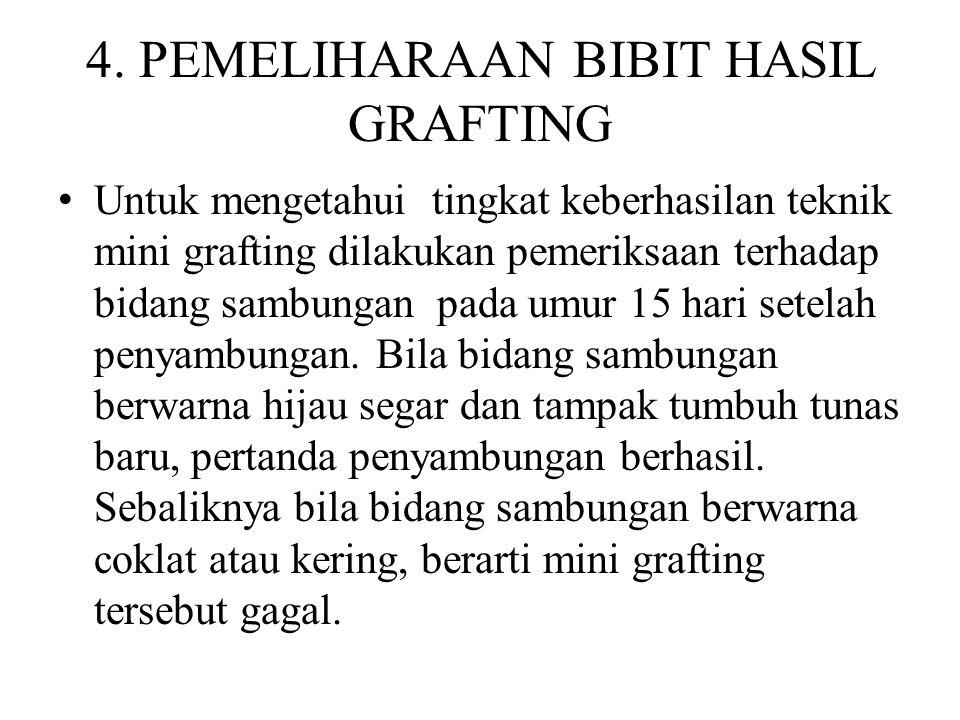 4. PEMELIHARAAN BIBIT HASIL GRAFTING