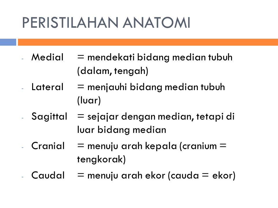 PERISTILAHAN ANATOMI Medial = mendekati bidang median tubuh (dalam, tengah) Lateral = menjauhi bidang median tubuh (luar)