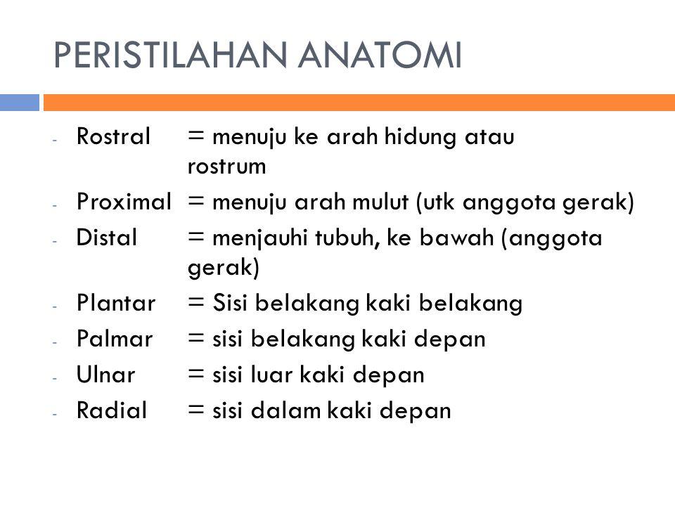 PERISTILAHAN ANATOMI Rostral = menuju ke arah hidung atau rostrum