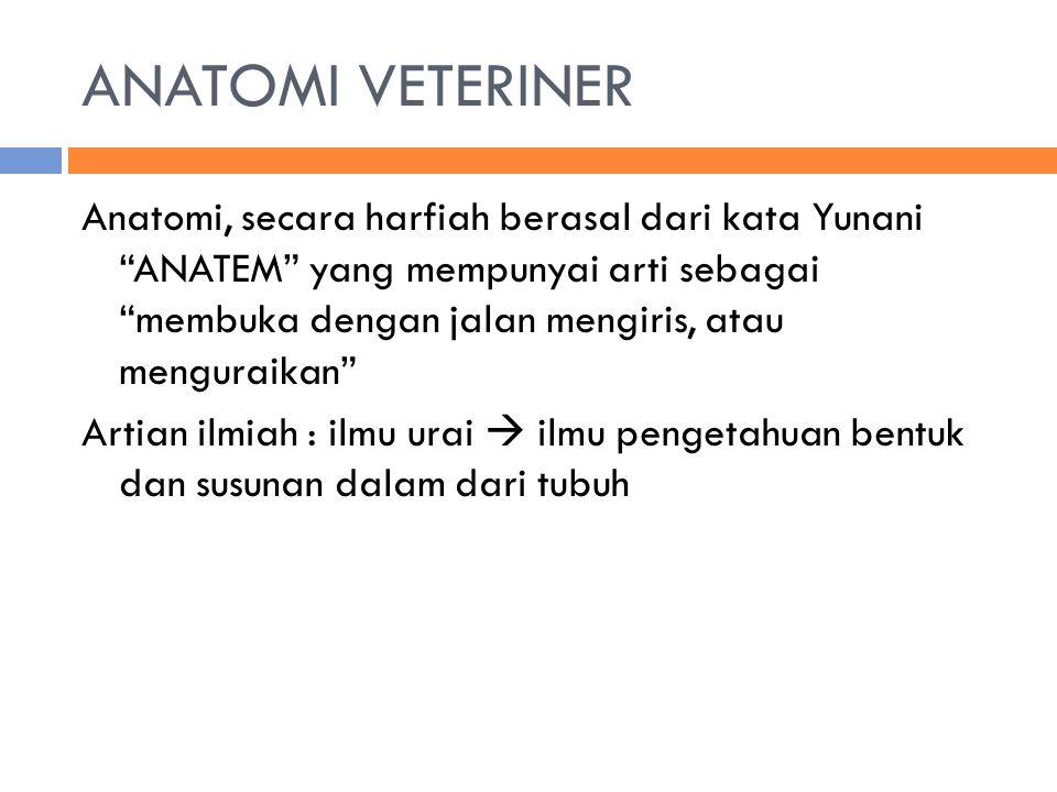 ANATOMI VETERINER