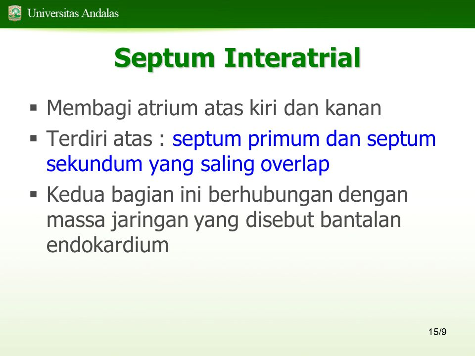 Septum Interatrial Membagi atrium atas kiri dan kanan