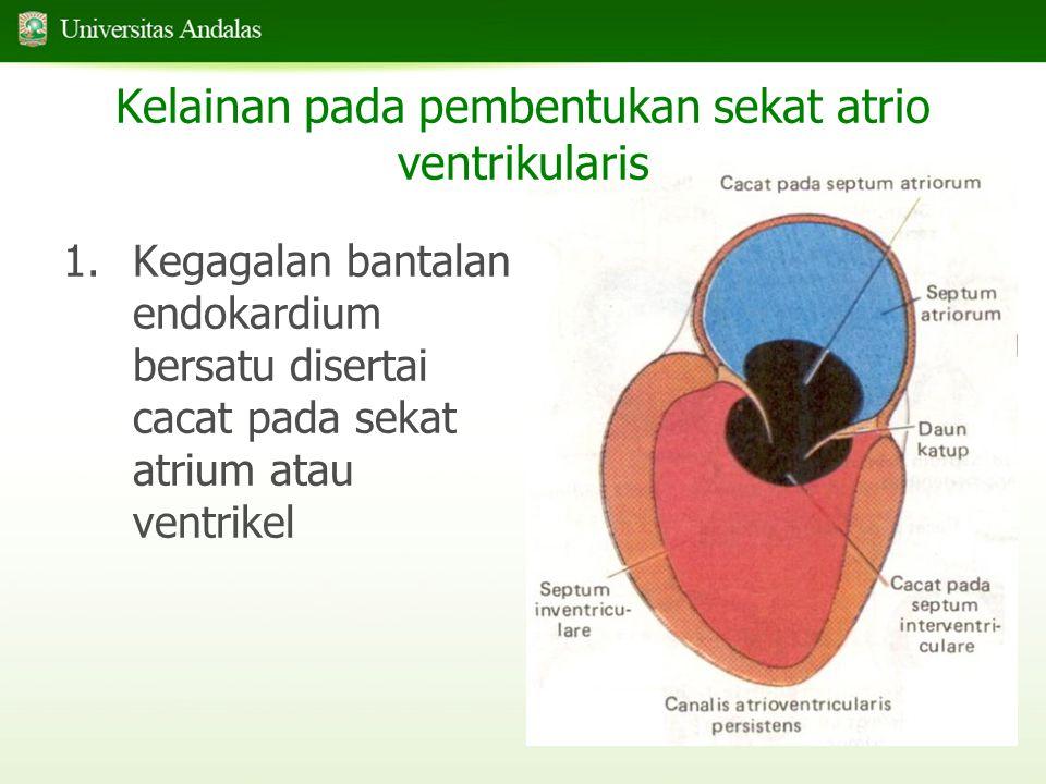 Kelainan pada pembentukan sekat atrio ventrikularis