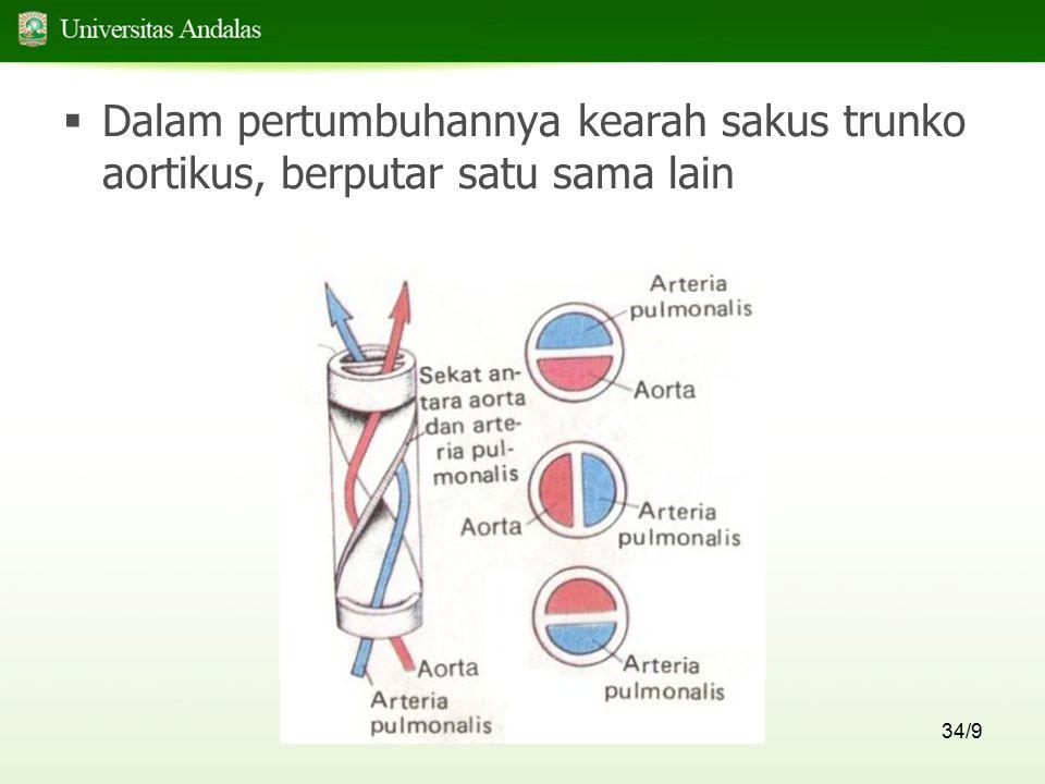 Dalam pertumbuhannya kearah sakus trunko aortikus, berputar satu sama lain
