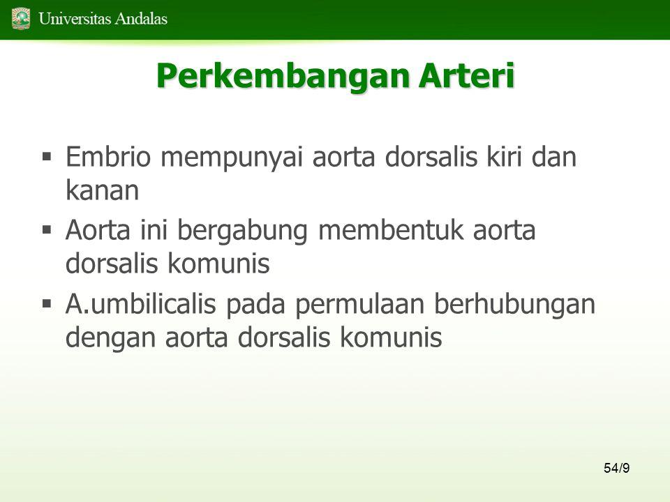 Perkembangan Arteri Embrio mempunyai aorta dorsalis kiri dan kanan