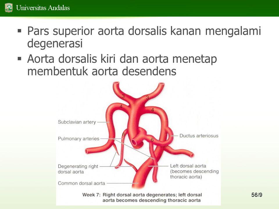 Pars superior aorta dorsalis kanan mengalami degenerasi