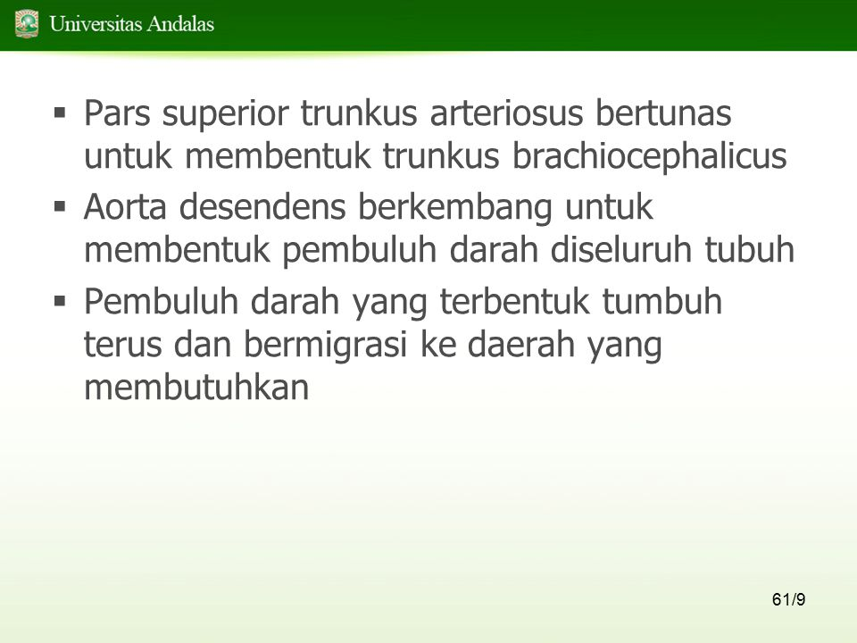 Pars superior trunkus arteriosus bertunas untuk membentuk trunkus brachiocephalicus