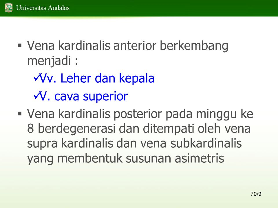 Vena kardinalis anterior berkembang menjadi :