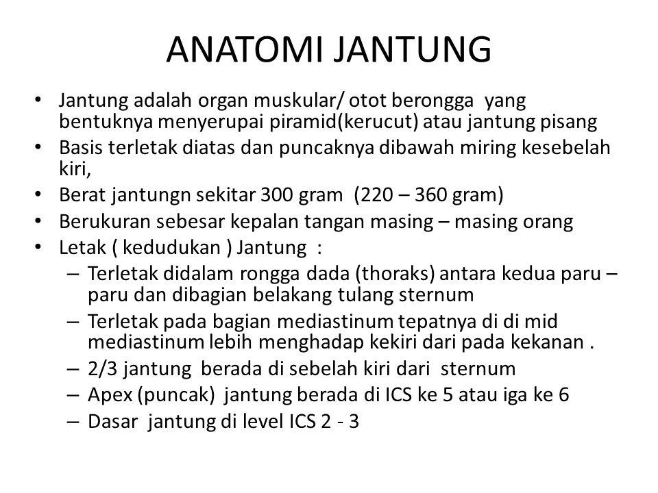ANATOMI JANTUNG Jantung adalah organ muskular/ otot berongga yang bentuknya menyerupai piramid(kerucut) atau jantung pisang.