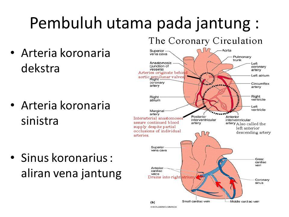 Pembuluh utama pada jantung :
