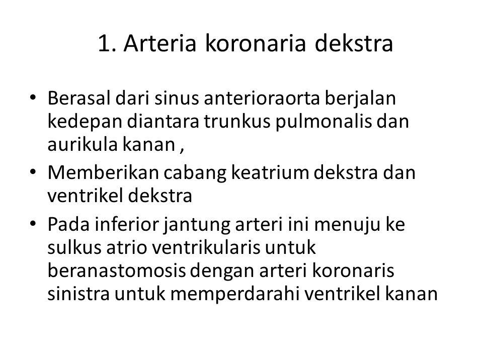 1. Arteria koronaria dekstra