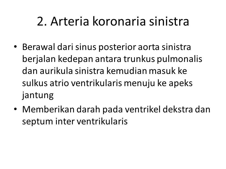 2. Arteria koronaria sinistra