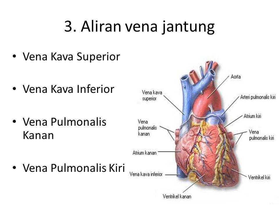 3. Aliran vena jantung Vena Kava Superior Vena Kava Inferior