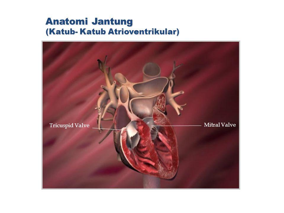 Anatomi Jantung (Katub- Katub Atrioventrikular)