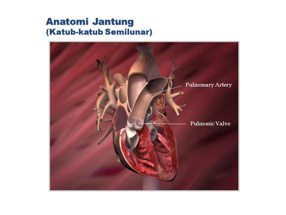 Anatomi Jantung (Katub-katub Semilunar)