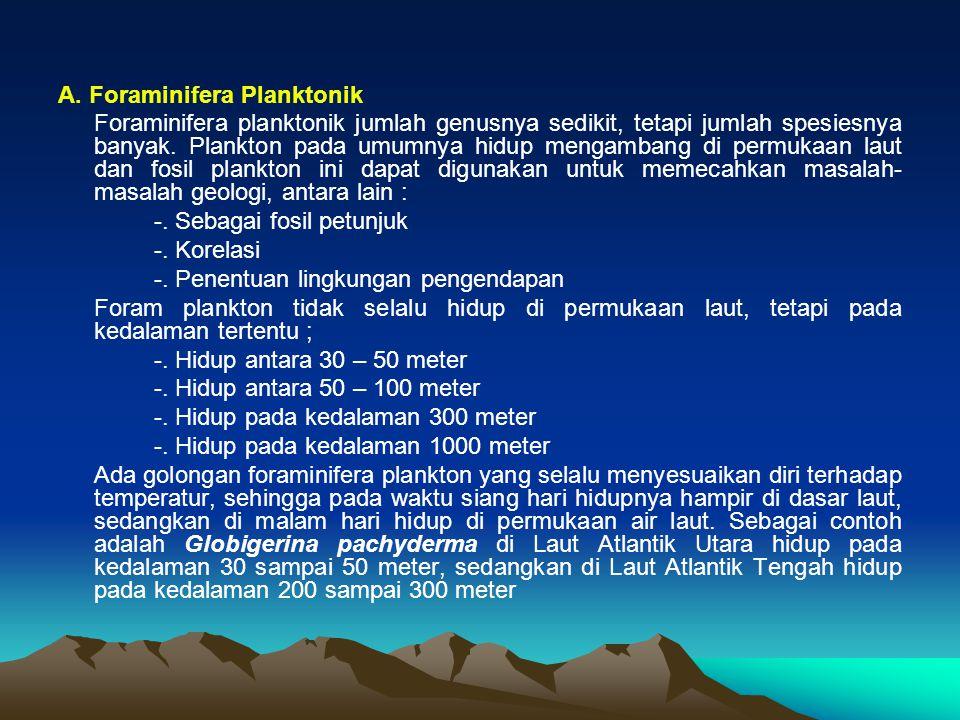 A. Foraminifera Planktonik