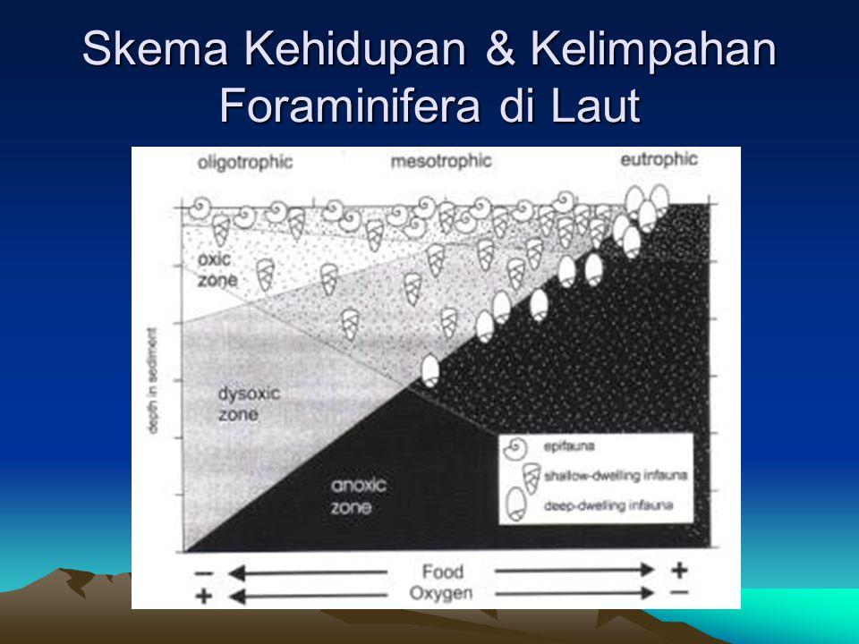 Skema Kehidupan & Kelimpahan Foraminifera di Laut