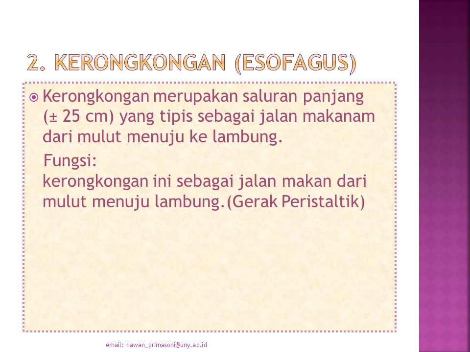 2. Kerongkongan (Esofagus)