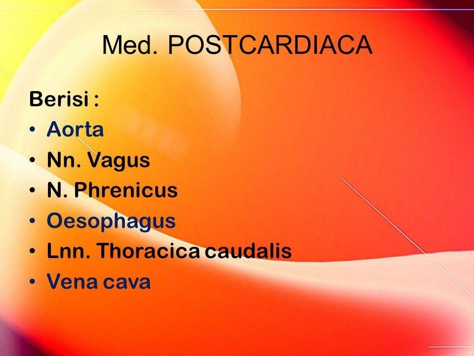 Med. POSTCARDIACA Berisi : Aorta Nn. Vagus N. Phrenicus Oesophagus