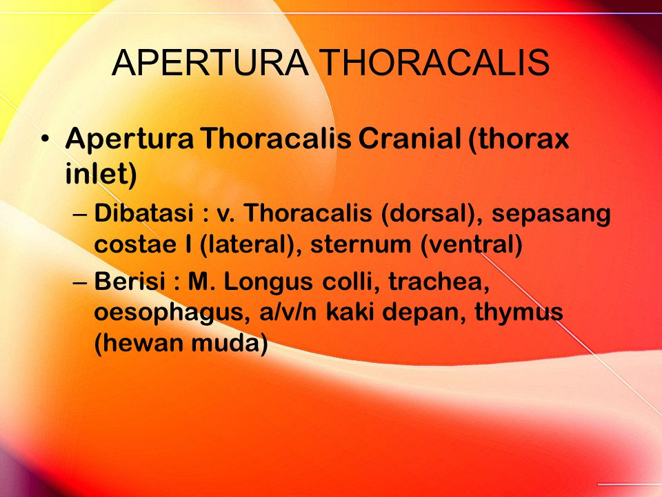APERTURA THORACALIS Apertura Thoracalis Cranial (thorax inlet)