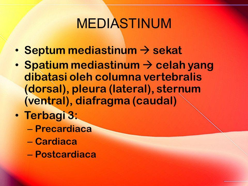 MEDIASTINUM Septum mediastinum  sekat
