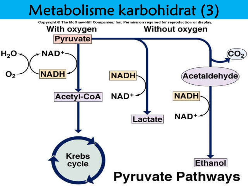 Metabolisme karbohidrat (3)