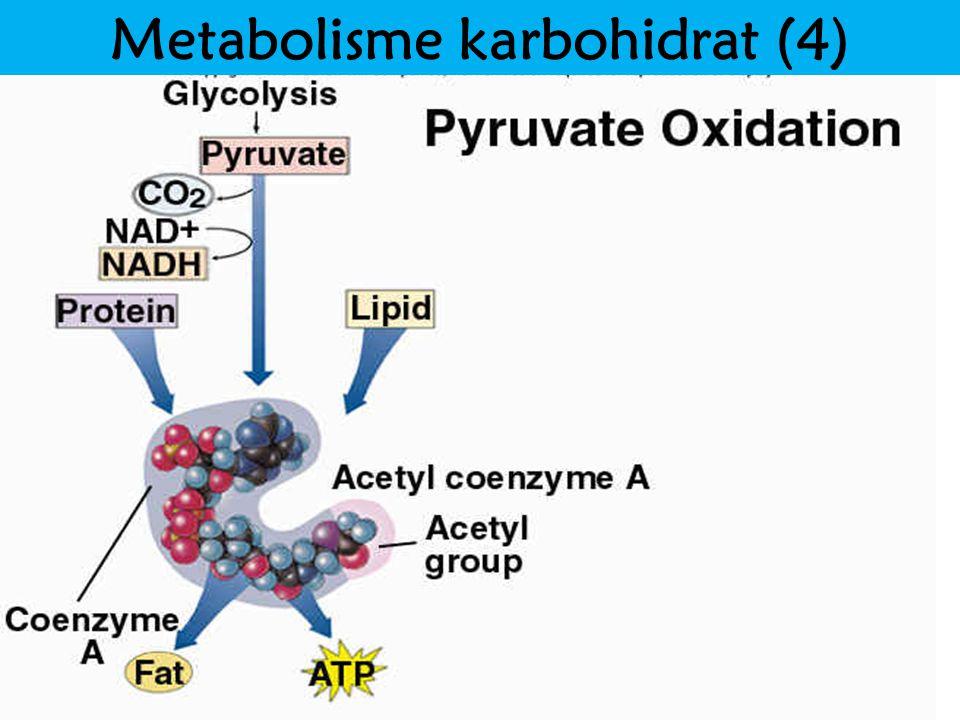Metabolisme karbohidrat (4)