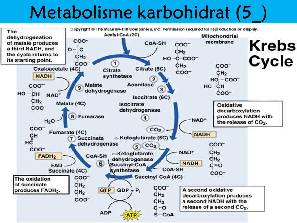 Metabolisme karbohidrat (5_)