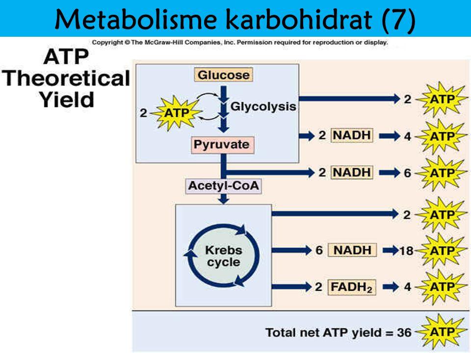 Metabolisme karbohidrat (7)