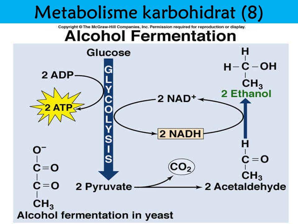 Metabolisme karbohidrat (8)