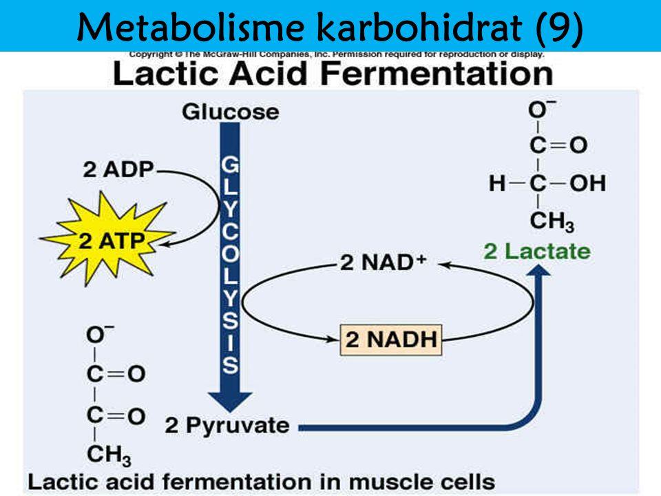 Metabolisme karbohidrat (9)