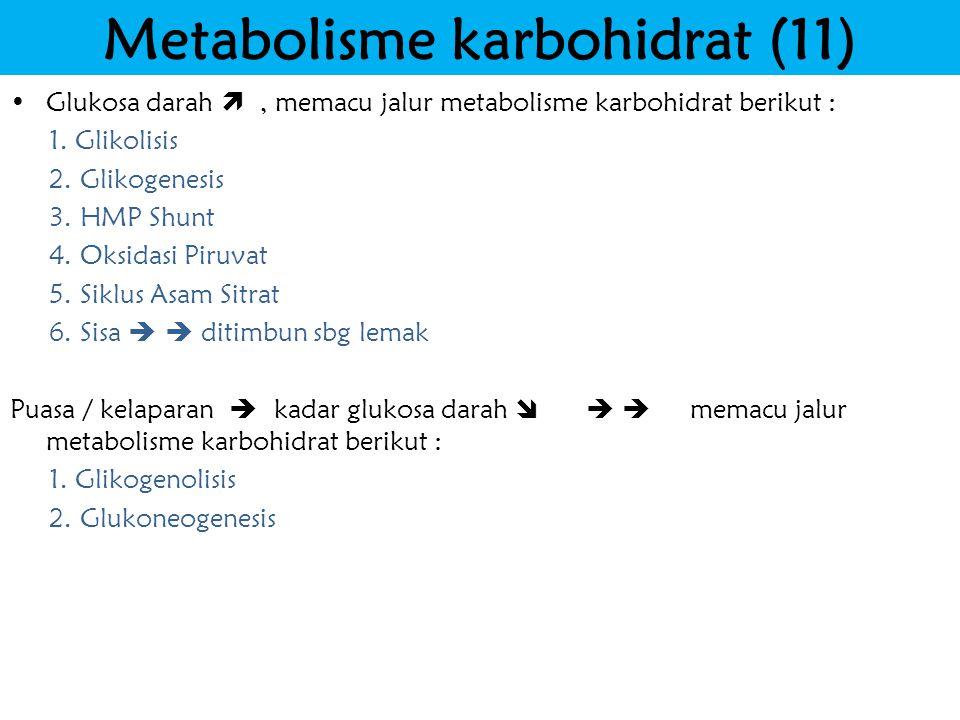 Metabolisme karbohidrat (11)