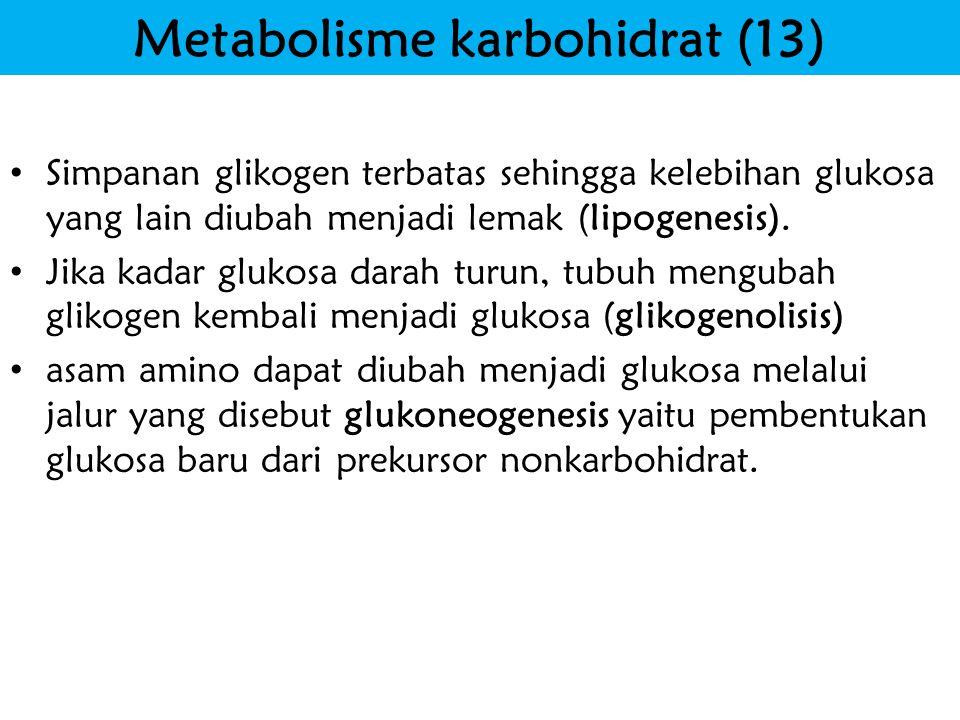 Metabolisme karbohidrat (13)