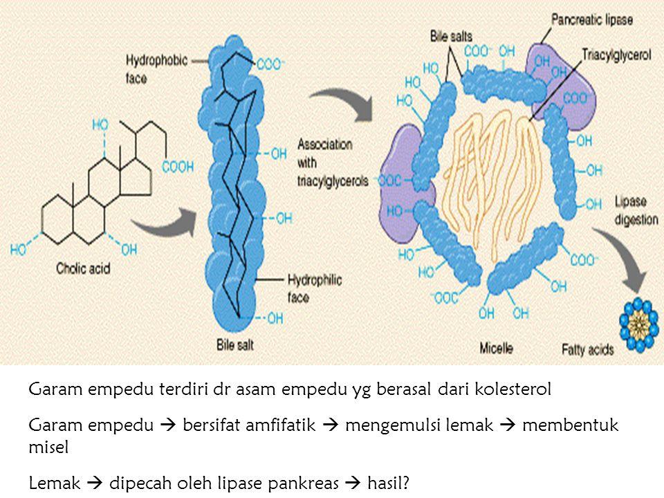 Title Garam empedu terdiri dr asam empedu yg berasal dari kolesterol