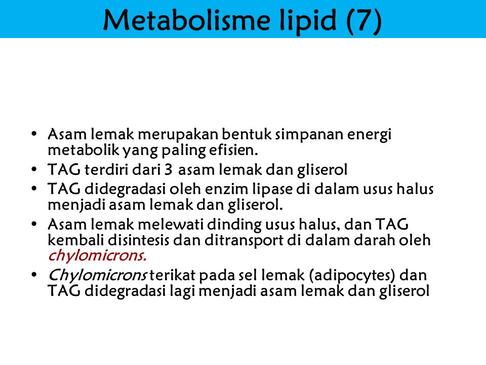 Metabolisme lipid (7) Title