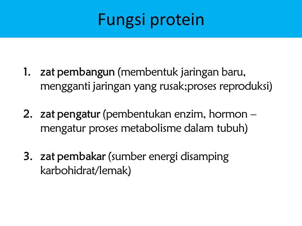 Fungsi protein zat pembangun (membentuk jaringan baru, mengganti jaringan yang rusak;proses reproduksi)