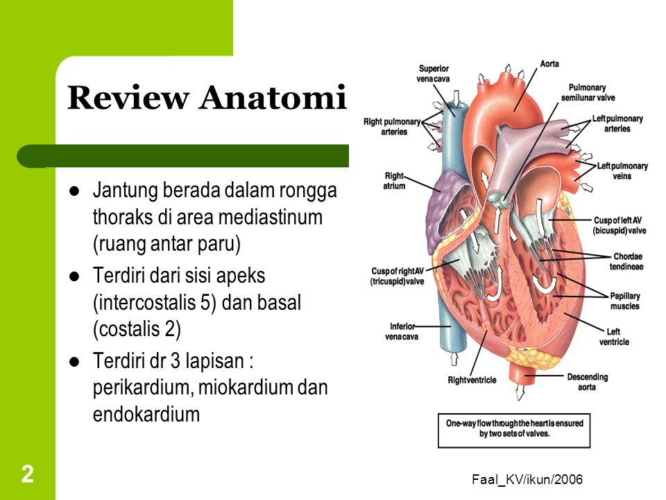 Review Anatomi Jantung berada dalam rongga thoraks di area mediastinum (ruang antar paru)