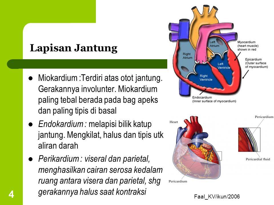 Lapisan Jantung Miokardium :Terdiri atas otot jantung. Gerakannya involunter. Miokardium paling tebal berada pada bag apeks dan paling tipis di basal.