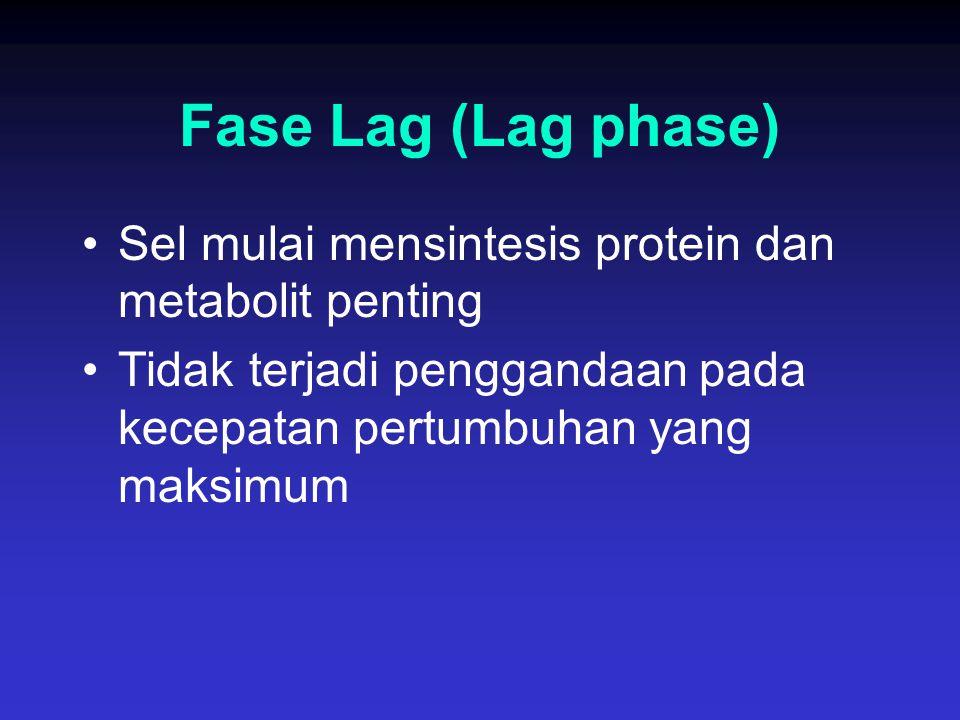 Fase Lag (Lag phase) Sel mulai mensintesis protein dan metabolit penting.