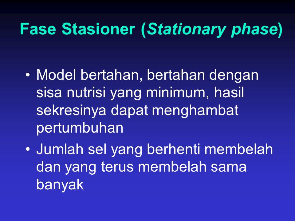Fase Stasioner (Stationary phase)
