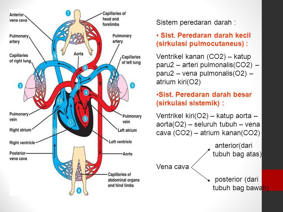 Sistem peredaran darah :
