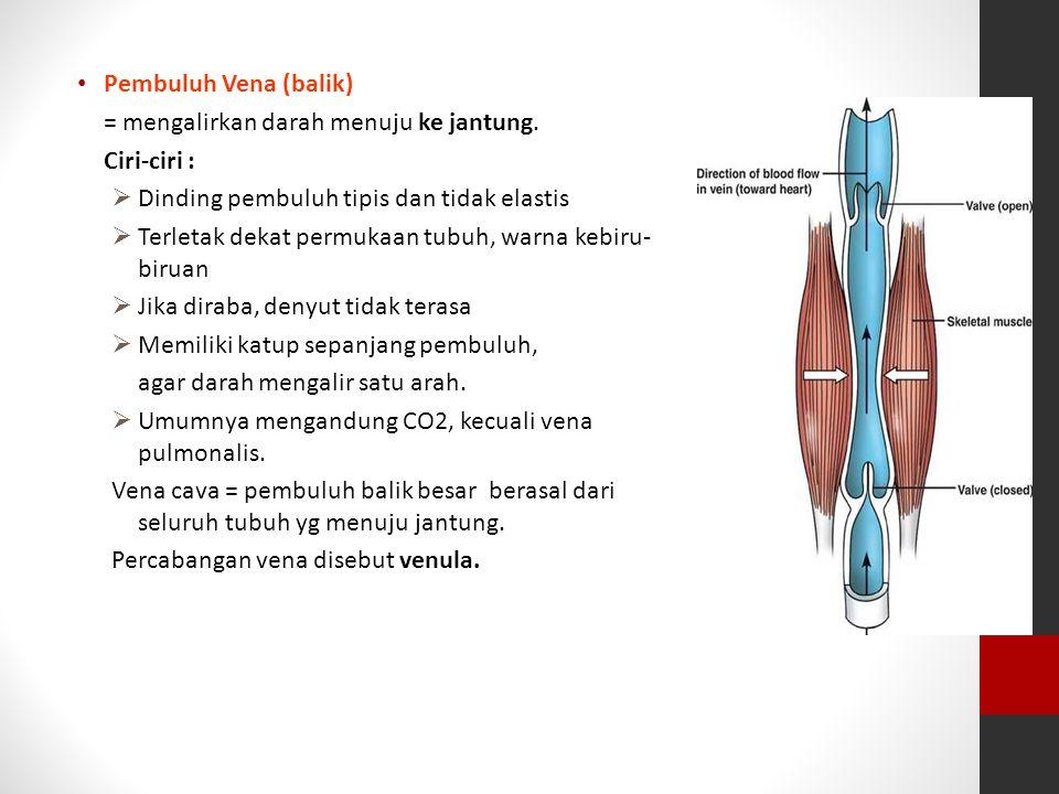 Pembuluh Vena (balik) = mengalirkan darah menuju ke jantung. Ciri-ciri : Dinding pembuluh tipis dan tidak elastis.