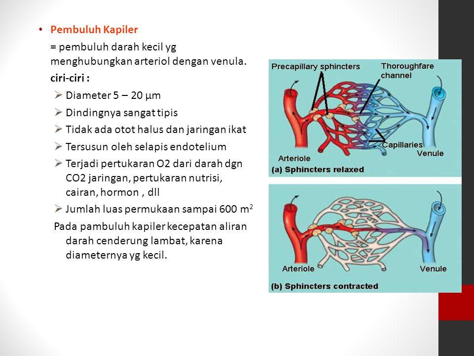 Pembuluh Kapiler = pembuluh darah kecil yg menghubungkan arteriol dengan venula. ciri-ciri : Diameter 5 – 20 μm.